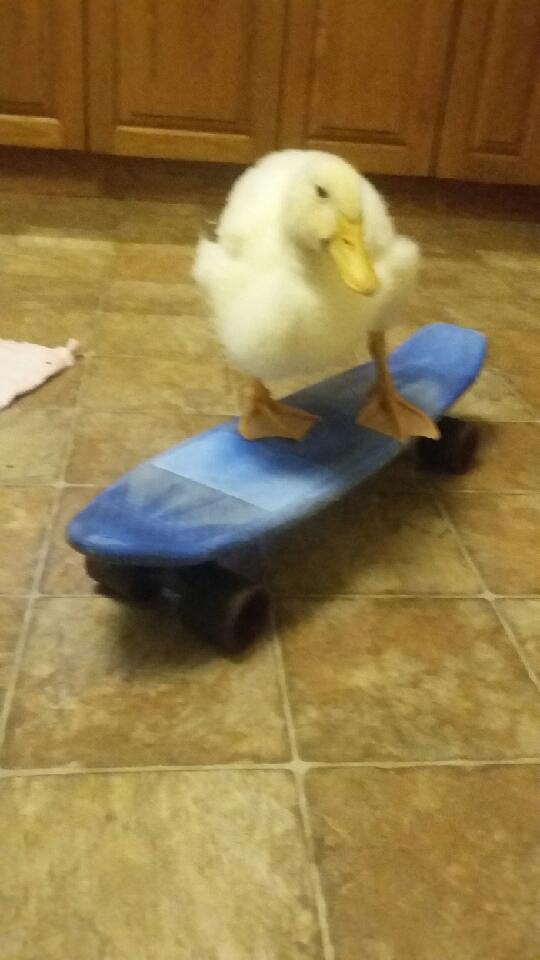 Pecky skateboard